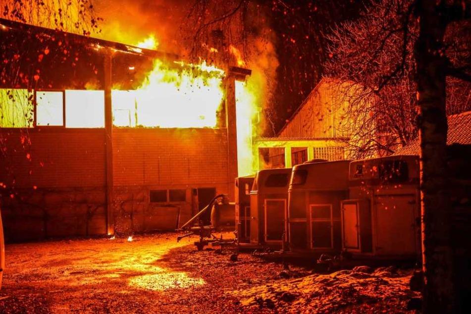 Großbrand neben Reithalle: Pferde müssen aus Flammen-Hölle gerettet werden
