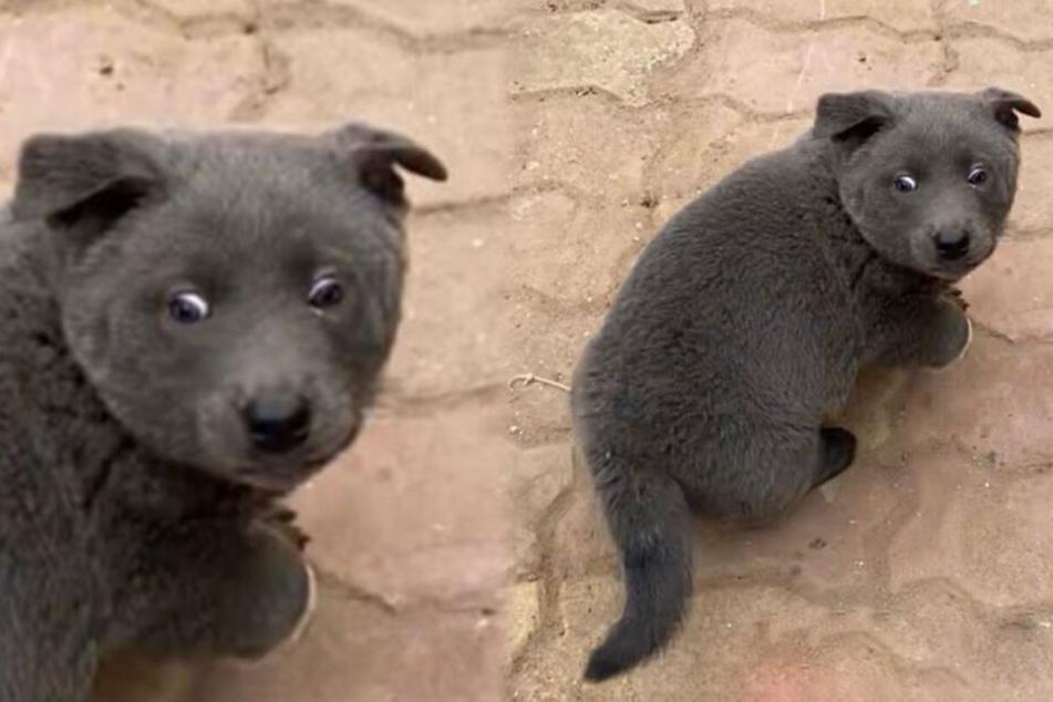 Die Augen des Katzenhundes haben auch etwas von Opossum Heidi.