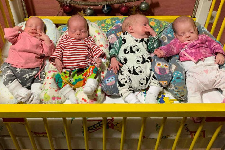Diese vier Babys sind ein kleines Weihnachtswunder