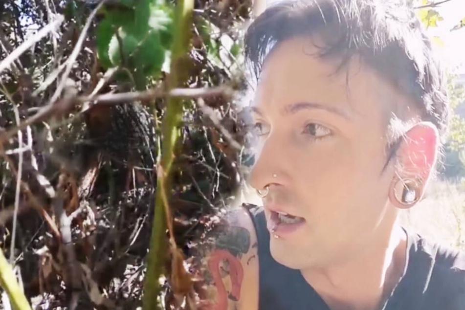 Weil die Brombeerbüsche den Pflaumenbaum fast ersticken, reißt der TV-Star sie kurzerhand aus dem Boden.