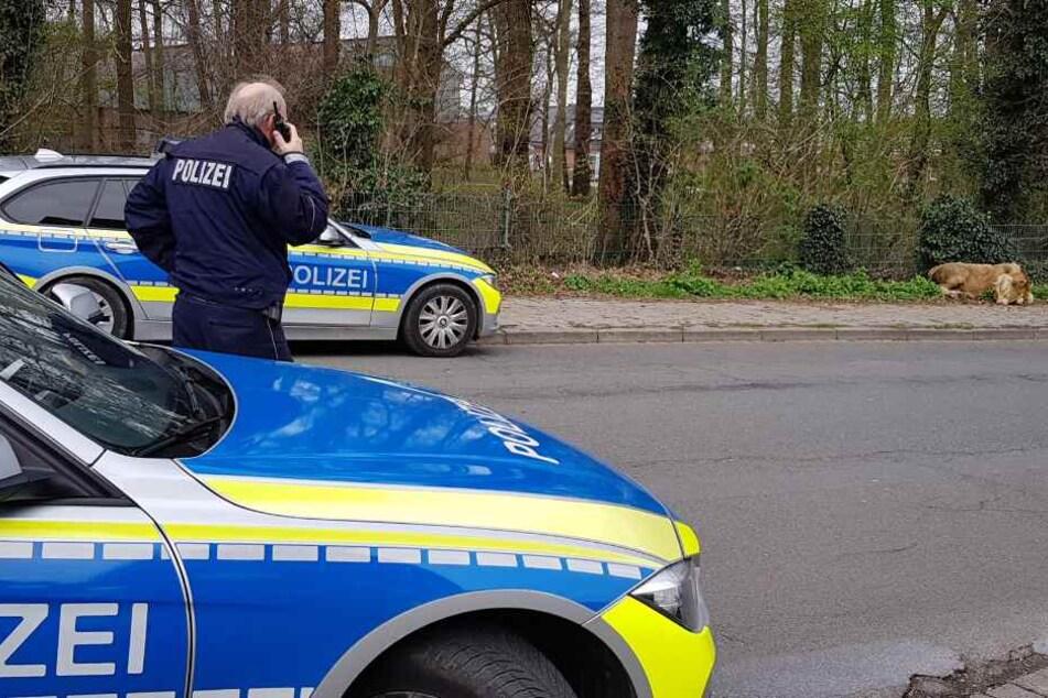 Die Polizei musste dabei helfen, die Tiere wieder einzufangen. (Symbolbild)
