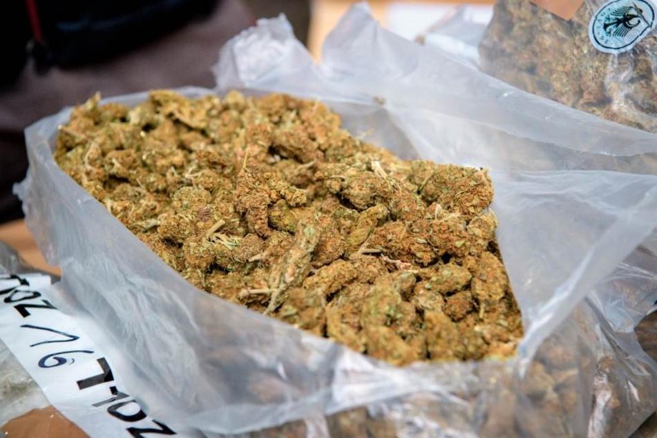 Drogendealernetz aufgeflogen: Polizei findet 51 Kilo Marihuana!