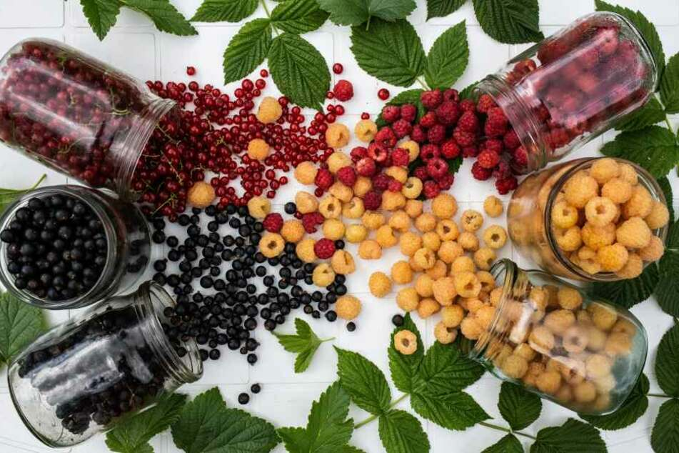 Johannis-, Stachel-, Brom- und Himbeeren belegen Platz 9 der beliebtesten Obstsorten der Deutschen