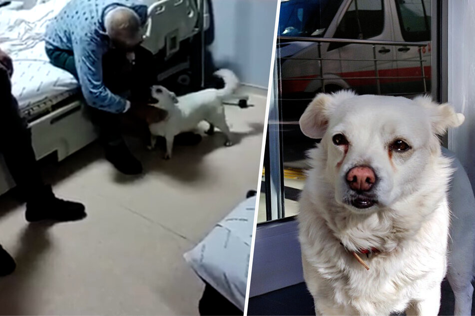 Loyal dog waits in front of hospital every day while his owner recovers