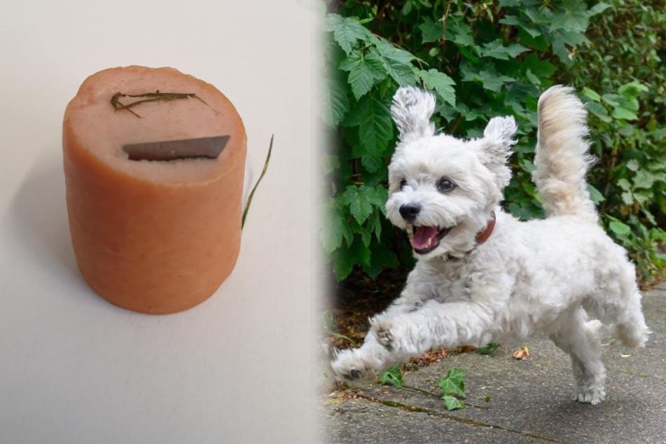 Hundehasser legt Wurststück mit Rasierklinge aus