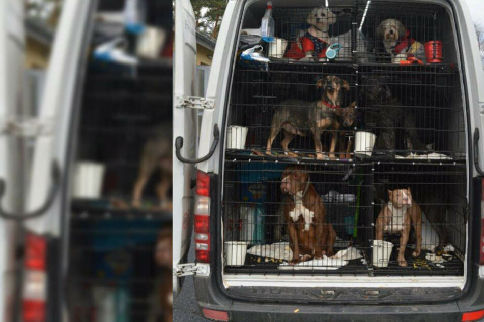 Die Tiere wurden in kleine Käfige eingepfercht.