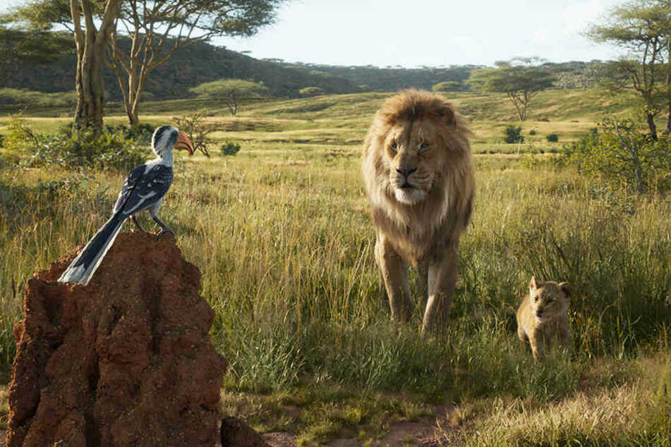 Mufasa (M.) bringt seinem Sohn und Erben Simba (r.) mit der Hilfe vom Rotschnabeltoko Zazu einiges bei.