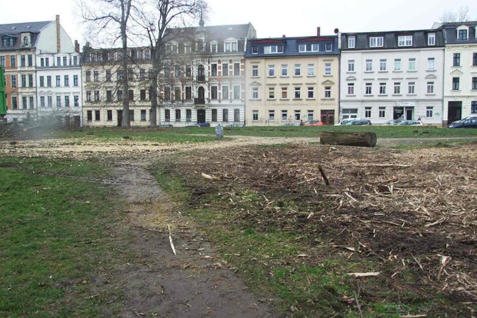 Dem Erdboden gleich: Die Bäume im Leopoldpark in Connewitz müssen für ein Großbauprojekt weichen.