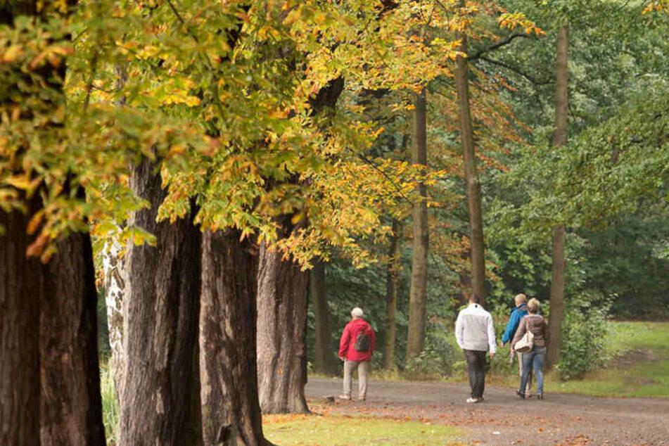 Der Herbst zeigt sich in den nächsten Tagen noch von seiner schönsten Seite.