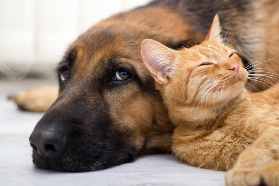 Ob Hunde und Katzen wirklich zu Sülze verarbeitet wurden, weiß heute niemand genau.