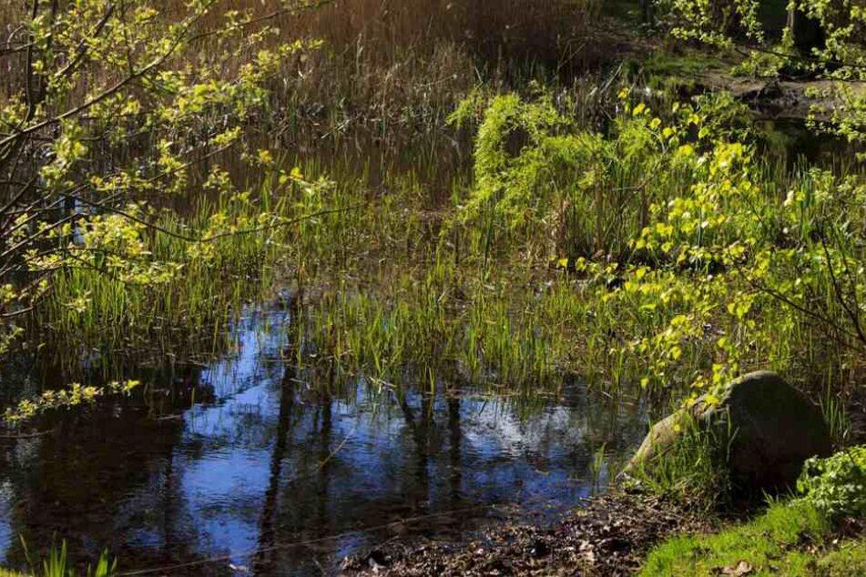 Ein Biotop wie dieses könnte in Verl bedroht sein. (Symbolfoto)