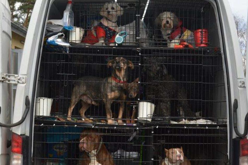 Hunde und Katzen in Käfig-Hölle transportiert und unter starke Medikamente gesetzt