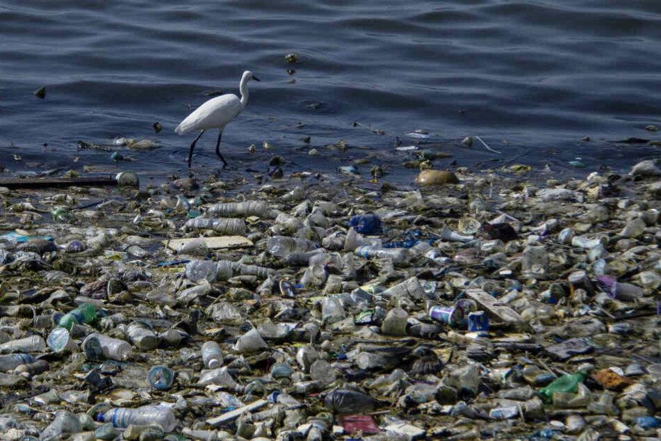 Auch für Tiere gefährlich. Ein Reiher in Indonesien in einem Haufen kontaminierter Kunststoffabfälle.