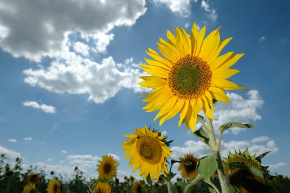 Sommerblumen strahlen in der Sonne.