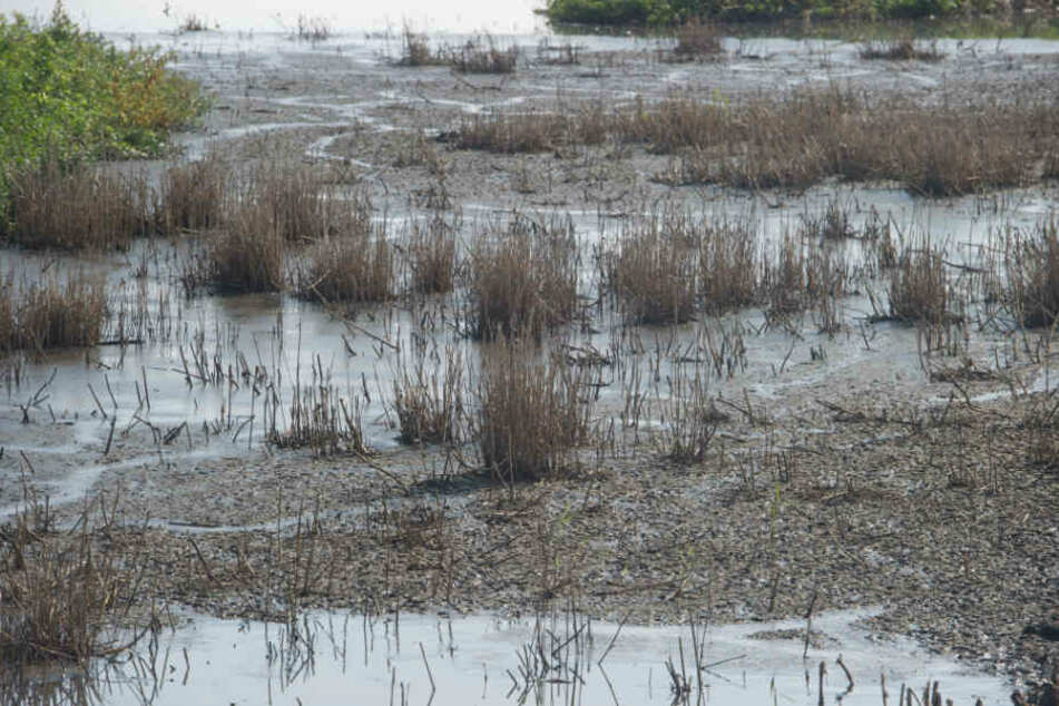 Umweltsünder wäscht hunderte Fahrzeuge illegal im See
