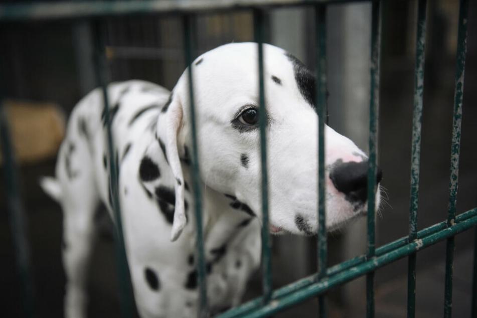 Kein Hund sitzt gerne im Tierheim, trotzdem werden die Tiere nicht leichtfertig an neue Besitzer abgegeben, um sie zu schützen.