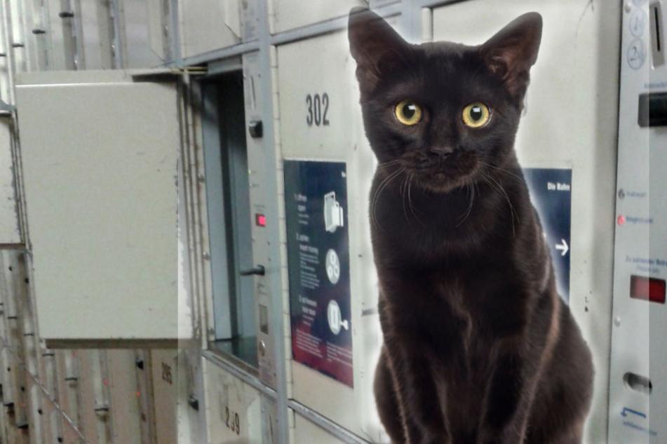 Unfassbar! Katze eine Woche in Bahnhofschließfach eingesperrt