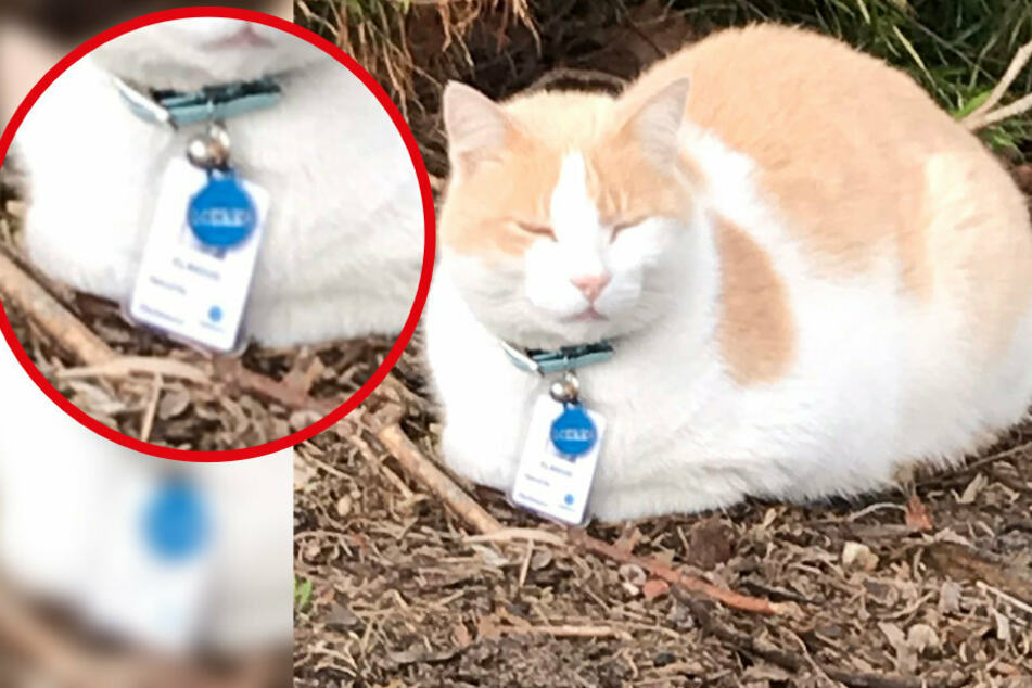 To serve and purr-tect: cat made part of hospital security staff