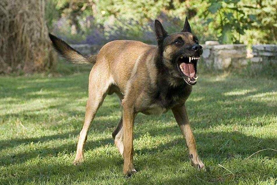En aggressiver Hund hatte sich in den Begleiter von John verbissen (Symbolbild).