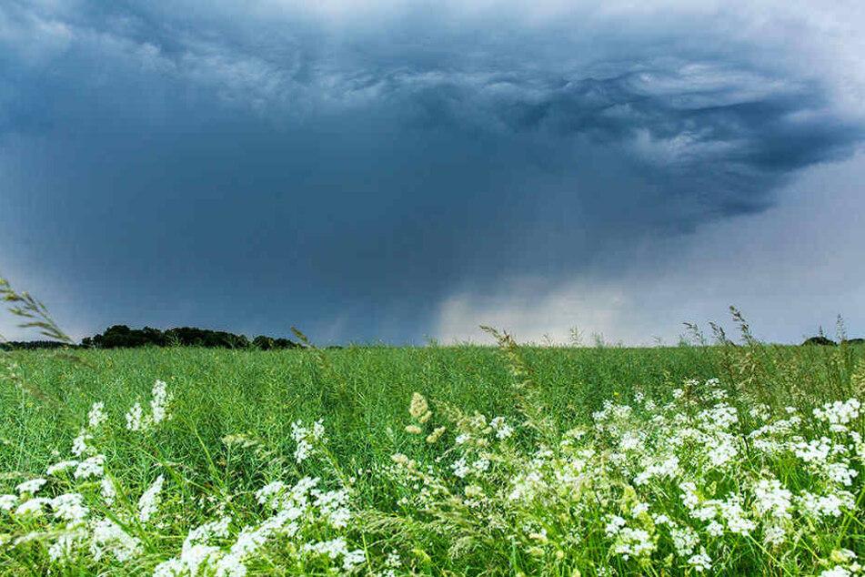 Der DWD hat für diesen Dienstag schwere Unwetter in Sachsen angekündigt. Diese dunkle Regenfront zieht gerade Richtung Leipzig.
