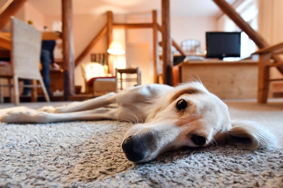 Mit dem Hund Urlaub machen? In Thüringen wird das immer beliebter. (Symbolbild)