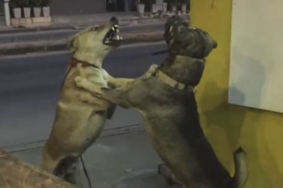Diese Hunde schienen sich so gar nicht lieb zu haben.