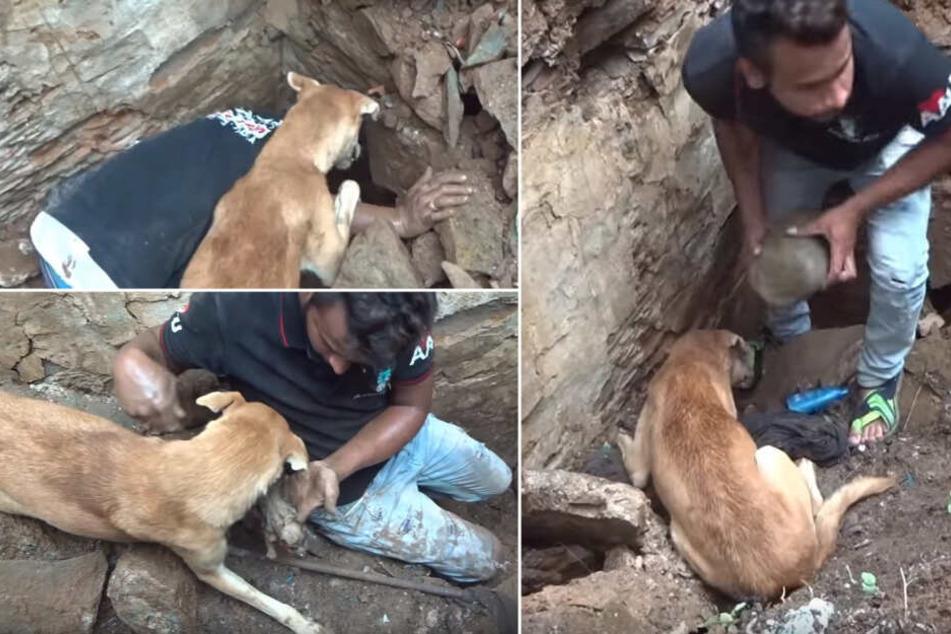 """Ein Tierschützer von """"Animal Aid Unlimited India"""" half der Hundemutter bei der Suche nach ihren Babys."""