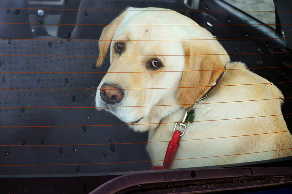 Ein Hund saß während des Campus Festivals im Auto fest. (Symbolbild)