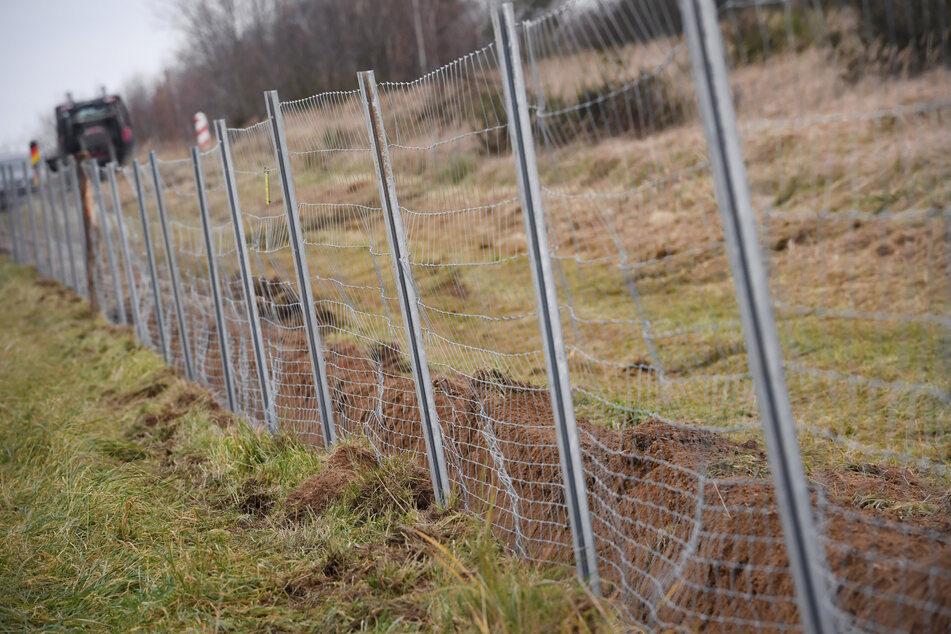 Spezielle Zäune: Sachsen-Anhalt reagiert auf drohende Fälle von Schweine- und Geflügelpest