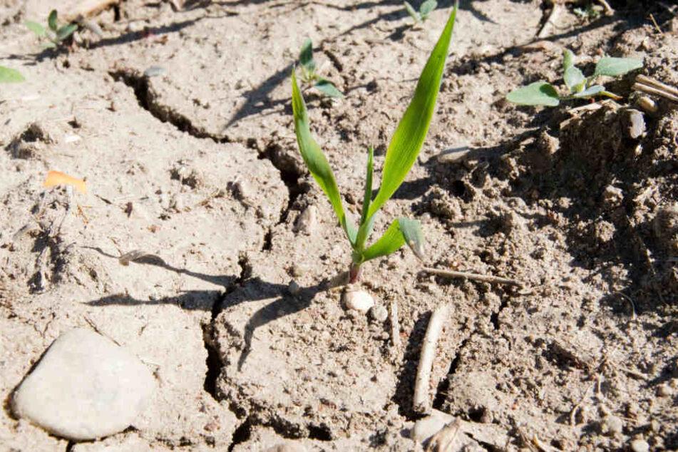 Nun auch wissenschaftlich belegt: Für die lang anhaltenden Dürren sind wir selbst verantwortlich.