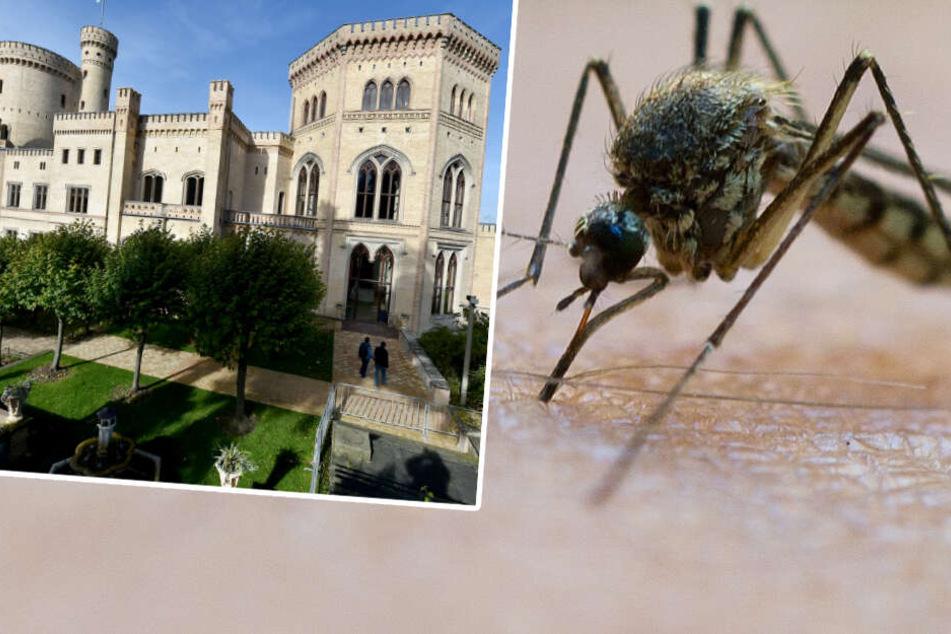 Geringe Winter-Niederschläge: Droht nun im Sommer die Mücken-Invasion?