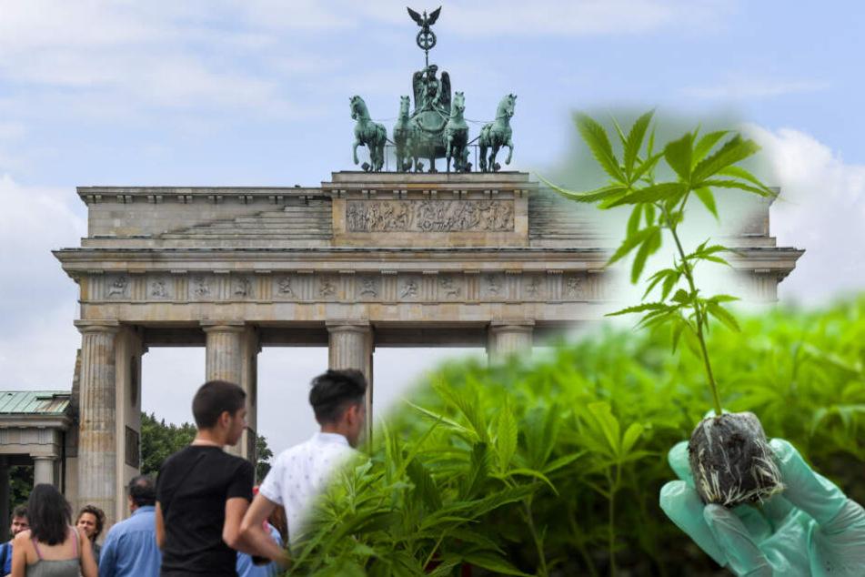 Wird Berlin die neue Hanfstadt?