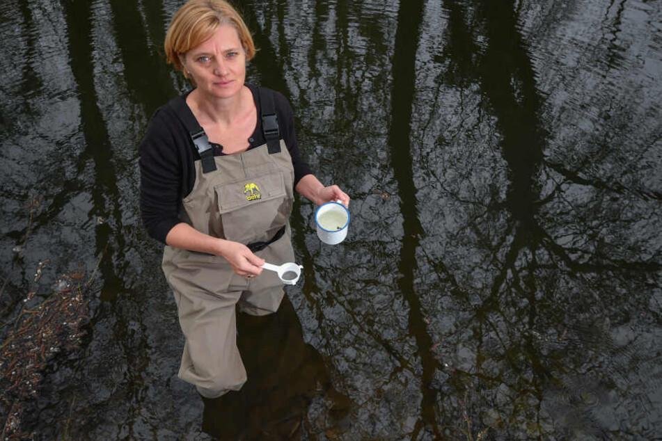 Mückenforscherin Doreen Walther vom Leibnitz-Zentrum für Agrarlandschaftsforschung (ZALF) steht in Wathose in einem kleinen Tümpel - auf der Suche nach Mückenlarven.