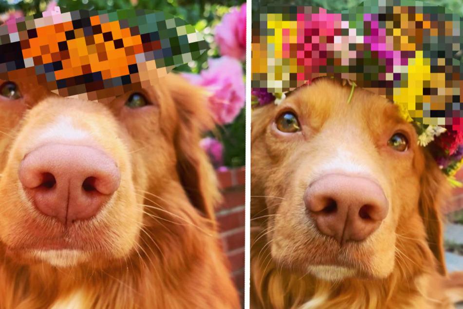 Die unglaublichen Freunde dieses Hundes machen ihn berühmt