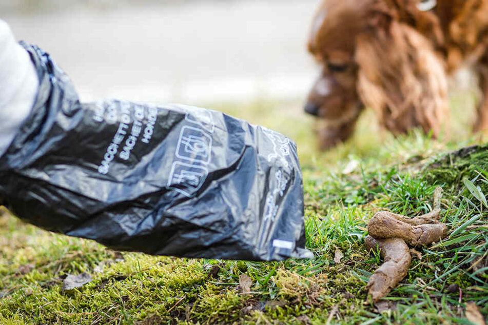 Die Grünen fordern, endlich spezielle Hundekotbehälter in Leipzig's Parks aufzustellen. (Symbolbild)
