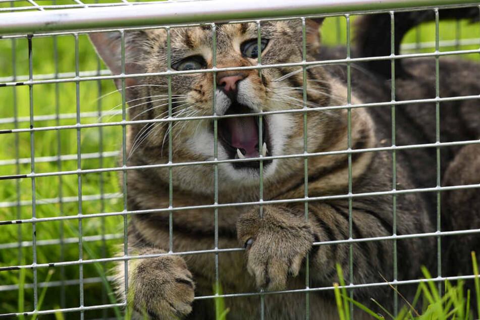 Die Tiere könnten mit Lebendfallen gefangen worden sein. (Symbolbild)