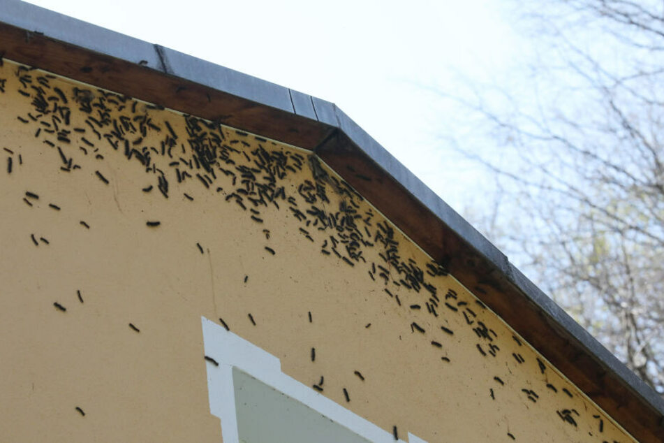 Millionen Tiere hatten sich in dem ganzen Ort verteilt, hingen auch bis an die Dächer der Häuser.