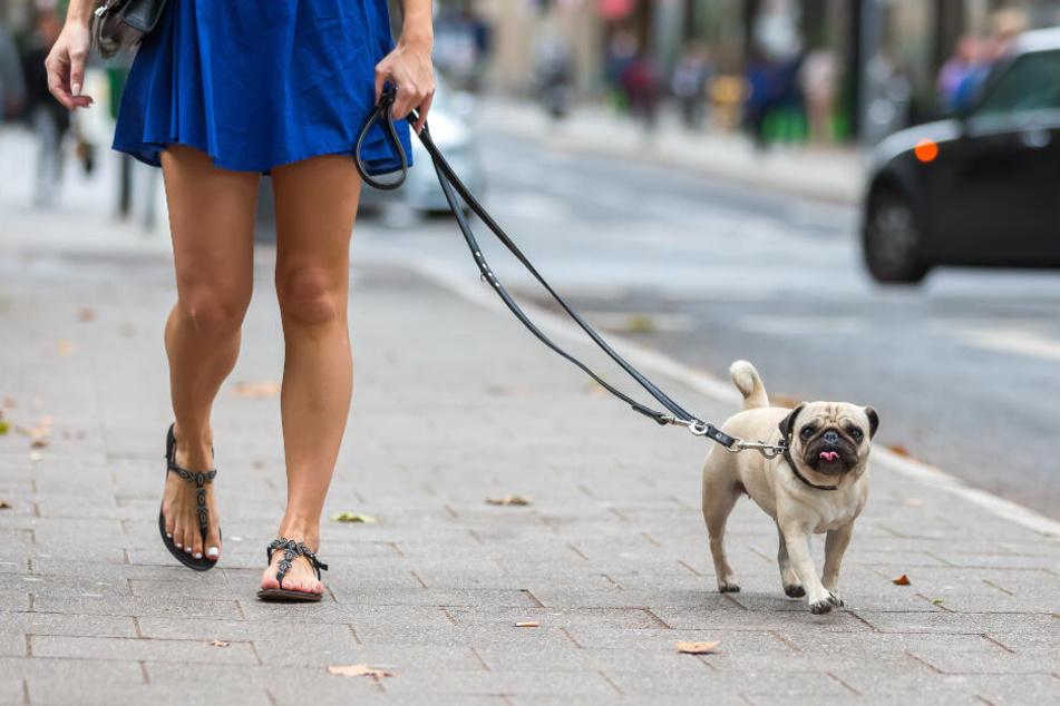 In Kitzscher hat ein 60-Jähriger einen Hund überfahren. (Symbolbild)