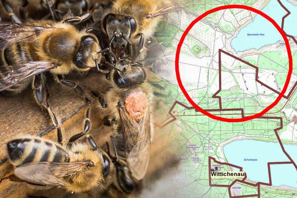 Bienenpest! Landratsamt ruft Sperrbezirk aus