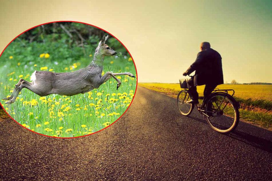 Ein Tier erwischte das Vorderrad des 52-Jährigen. (Symbolbild)