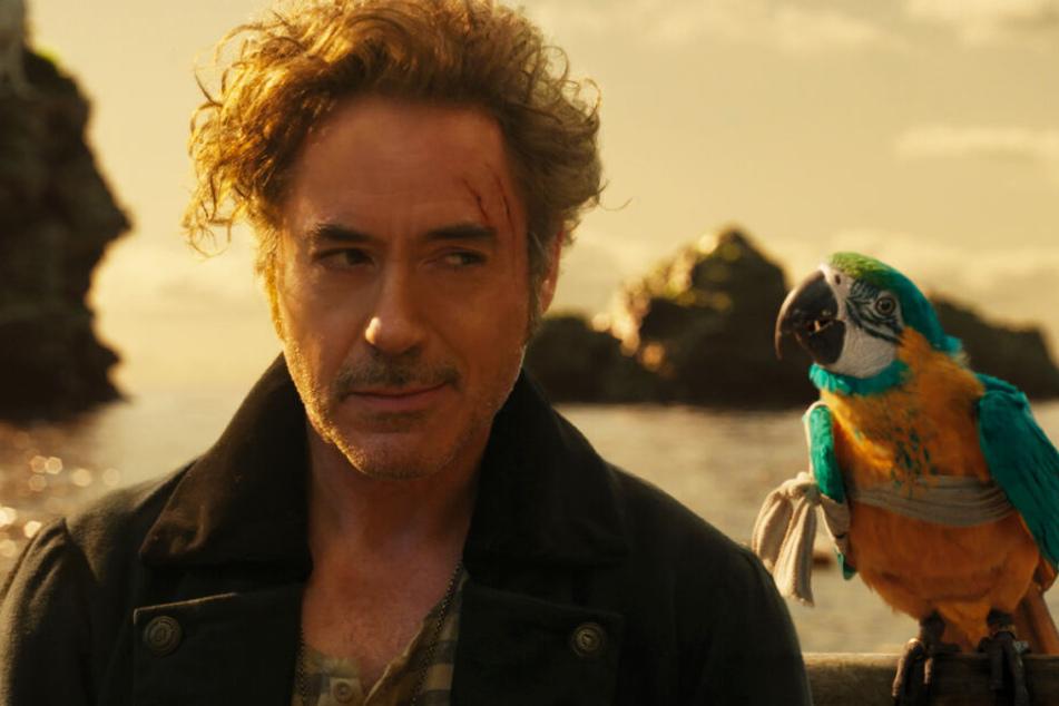Papagei-Dame Polynesia hilft John, wieder auf den richtigen Pfad zu finden.
