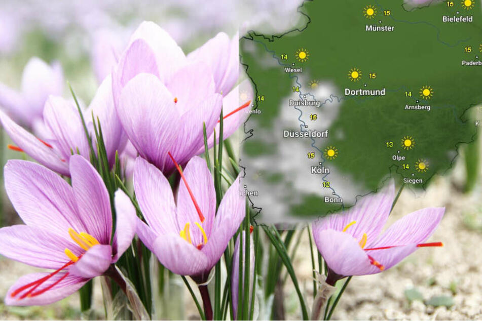 Das Wetter wird bis Ostern immer freundlicher. (Symbolbild)