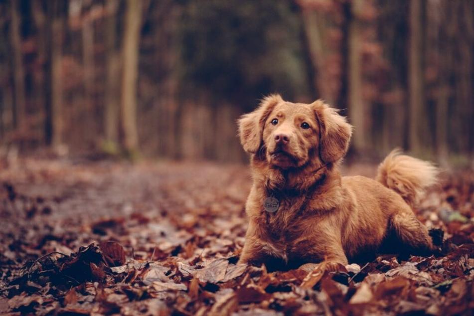 Ob Spaziergang im Sommer oder Winter: Hunde genießen es zu jeder Jahreszeit, Zeit mit ihren Menschen zu verbringen.