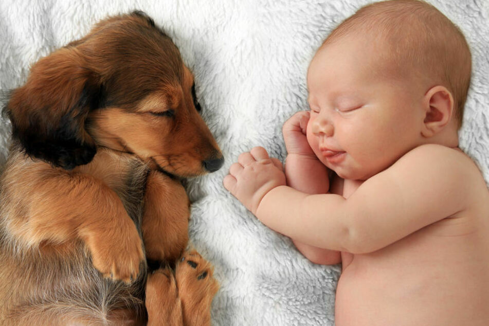 So cute! But it's not always good for dogs and babies to be this close to each other.