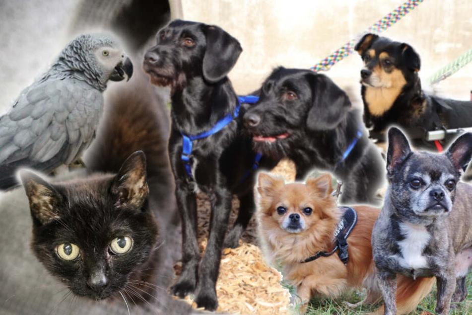 7 besondere Tiere: Hat niemand ein Herz für diese Hunde, Katzen und Papageien?
