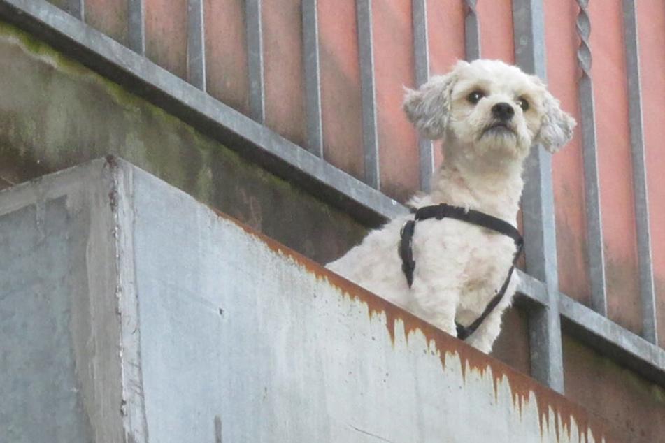 München: Nachbarn retten Hund aus Brandwohnung