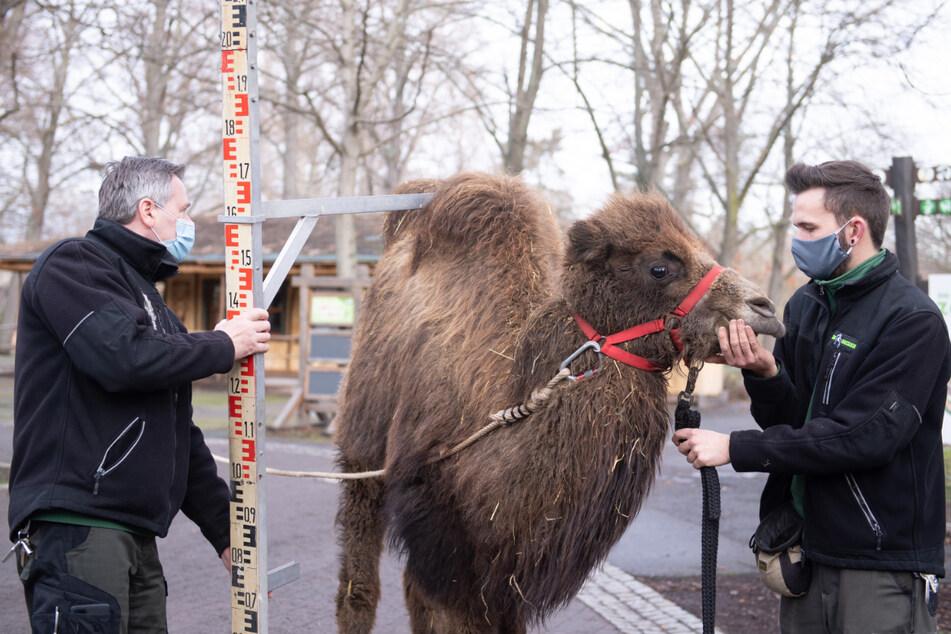 Dramatischer Einnahmeverlust beim Dresdner Zoo, Planungen gehen trotzdem weiter