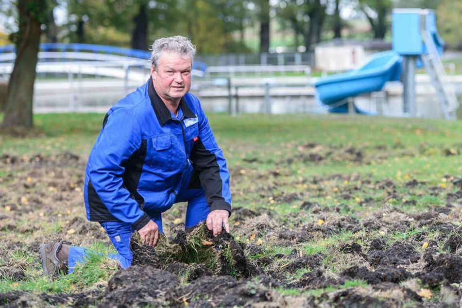 Bademeister Steffen Wolf (58) zeigt, welchen Schaden die Schweine angerichtet haben.