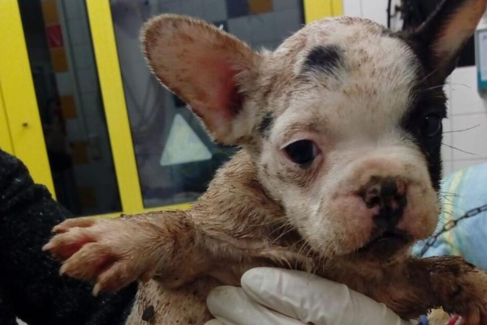 Absolut grausam: Hunde-Welpen in eigenem Kot und Urin eingepfercht