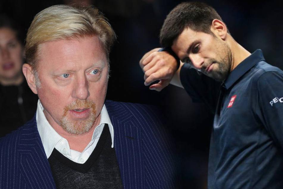 Mit Becker hatte Djokovic zweimal die Australian Open, zweimal in Wimbledon sowie einmal die French Open und US Open gewonnen.
